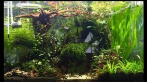 Jungle Style Aquascaped by Franco Chester Pongco Philippines