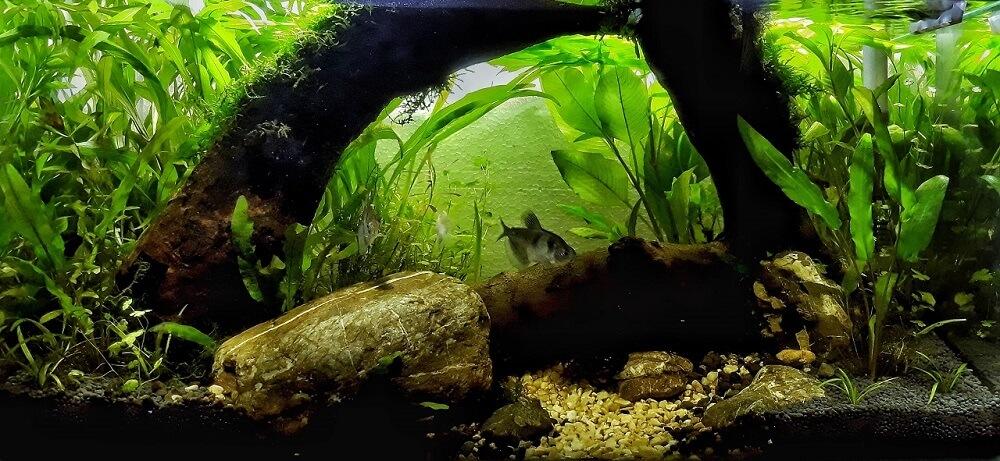 Jungle Style Aquascaped by Fritz Rabaya Philippines