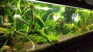 Jungle Style Aquascaped by Stoffer Samudio Philippines