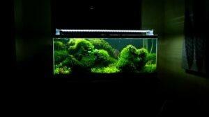 Moss Evolution Jay-R Huelar