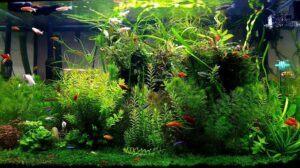 My 35 Gallons Planted Aquarium