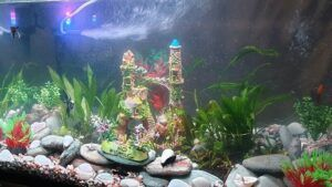 My Beginner's Planted Aquarium