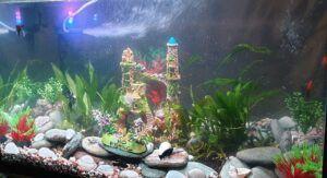My First Beginner Planted Aquarium Using the same Gravel, Shells, Filter, Filter Medias, Decorations, etc.