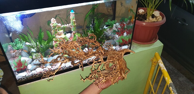 My Hardscape Diorama Style Bonsai Created for Me by Jeremy Navarro Philippines