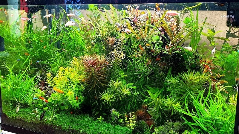 My Heavily Planted 35 Gallons Tank