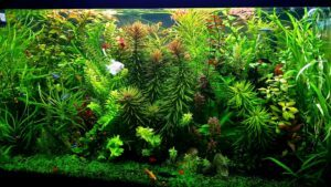 My Jungle Look Tank - No Time to Trim - Aquascaped by Lemuel Sacop Philippines