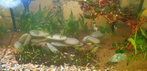 My New Aquasoil Made my Water Cloudy for a Few Days and I am not Liking the Different Color Compared to my Ista Aquasoil