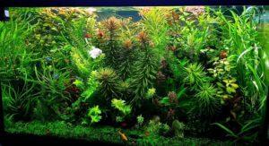 My Planted Aquarium Jungle