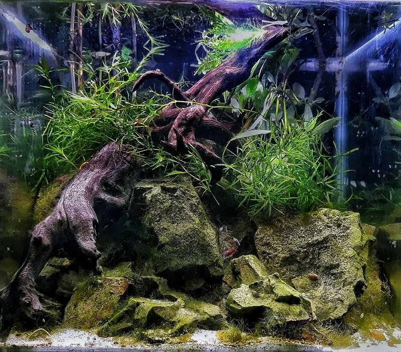 Nature Style 12x12x10 in Low Tech Aquascaped by Fritz Rabaya Philippines