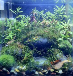 Nature Style 2.2 Gallons Low-Tech Yellow-Back and Fire Red Shrimp Aquascaped by Ian Paz Philippines