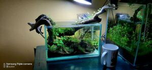 Nature Style 2.5 Gallons Low-Tech Aquascaped by Omar Krishnan Afuang Philippines