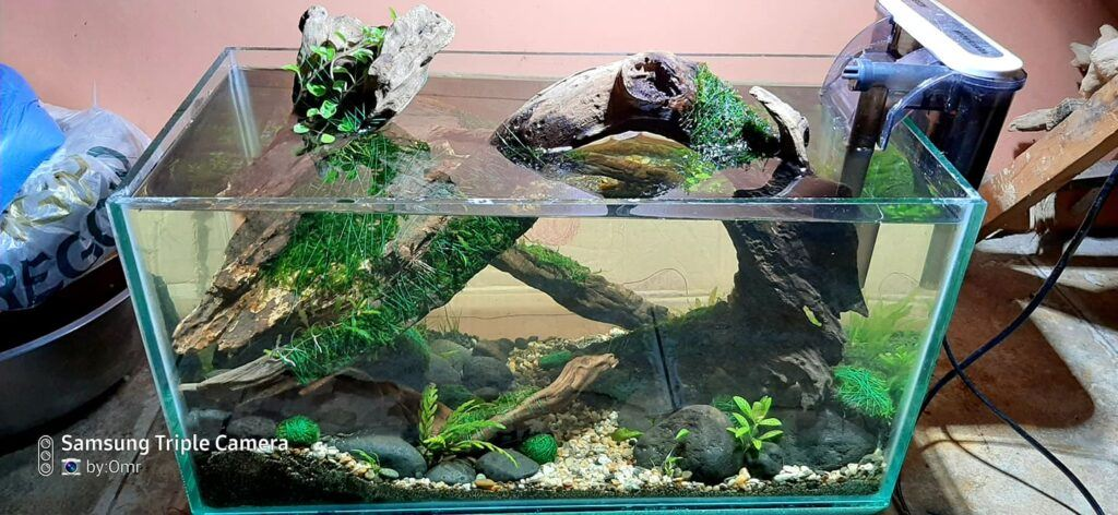 Nature Style 5 Gallons Low-Tech Aquascaped by Omar Krishnan Afuang Philippines