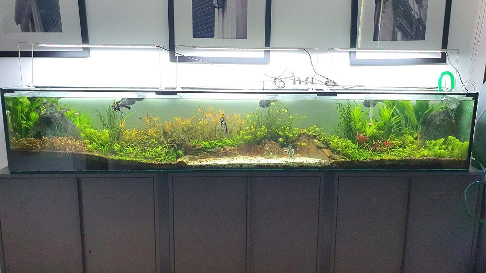 Nature Style 80 Gallons Long Eheim 600 Canister Filter with 3 Wave Makers High-Tech Aquascaped by Ramon B. Isla Philippines