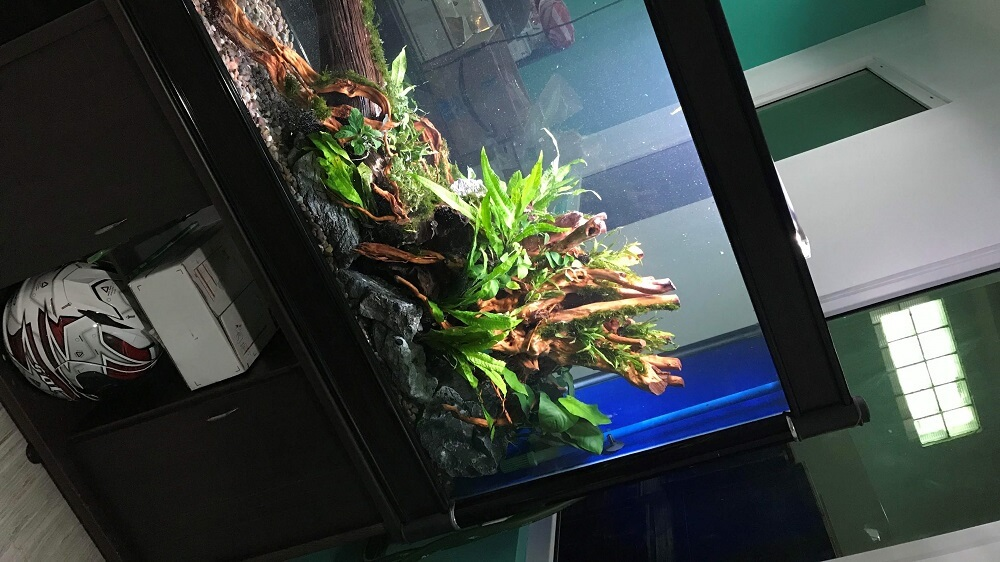 Nature Style Aquascaped by Jeremy Navarro Philippines