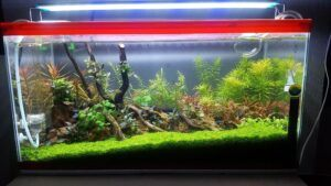 Nature Style Aquascaped by Khris F. Lim Philippines
