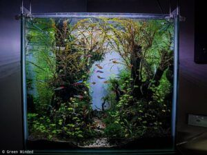 Nature Style Aquascaped by Oliver Silvestre Philippines