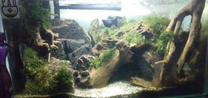 Nature Style Aquascaped by Stoffer Samudio Philippines