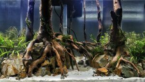 Nature Style Concave Layout 18x11x12 in Low-Tech Aquascaped by Fritz Rabaya Philippines