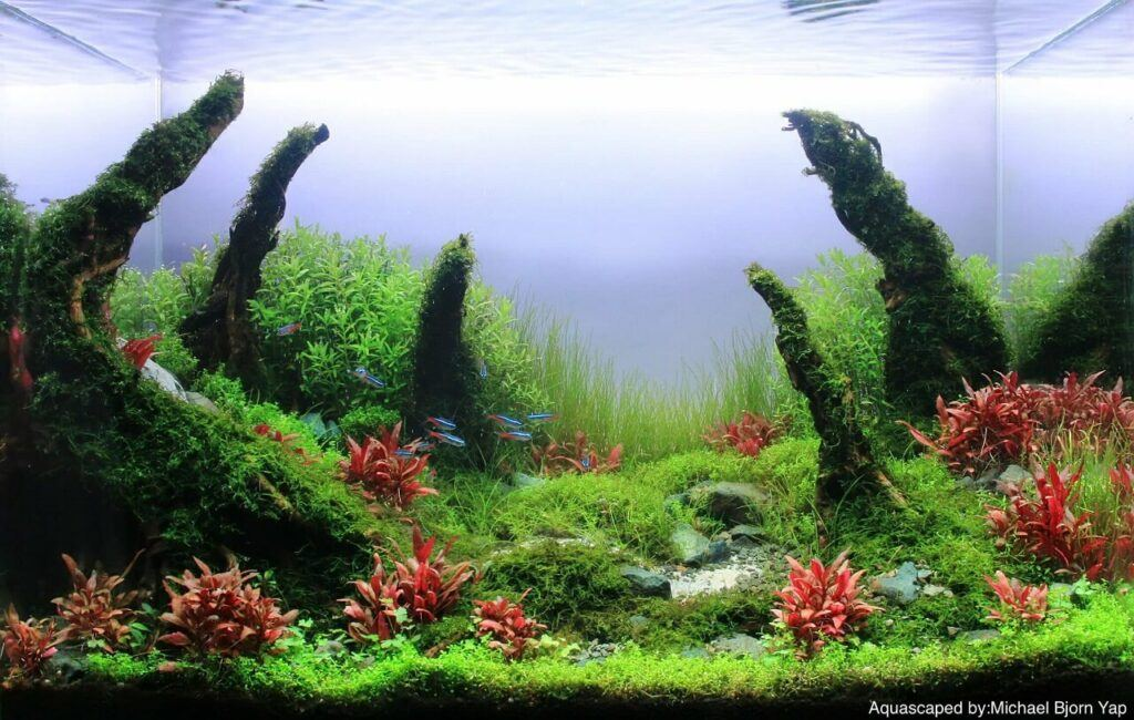 Nature Style Concave Layout 60x30x36 cm High Tech Aquascaped by Michael Yap Philippines