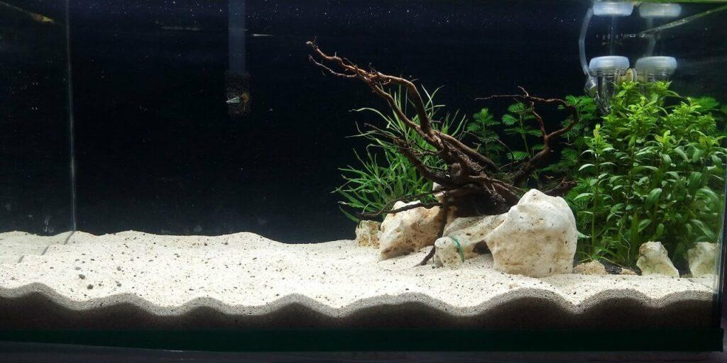 Nature Style Deep Substrate Aquascaped by Armel Adman David Philippines