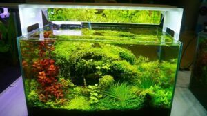 Nature Style High-Tech Aquascaped by Jay-R Huelar Philippines