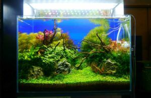 Nature Style High-Tech Aquascaped by Jay-R Huelar Philippines Two