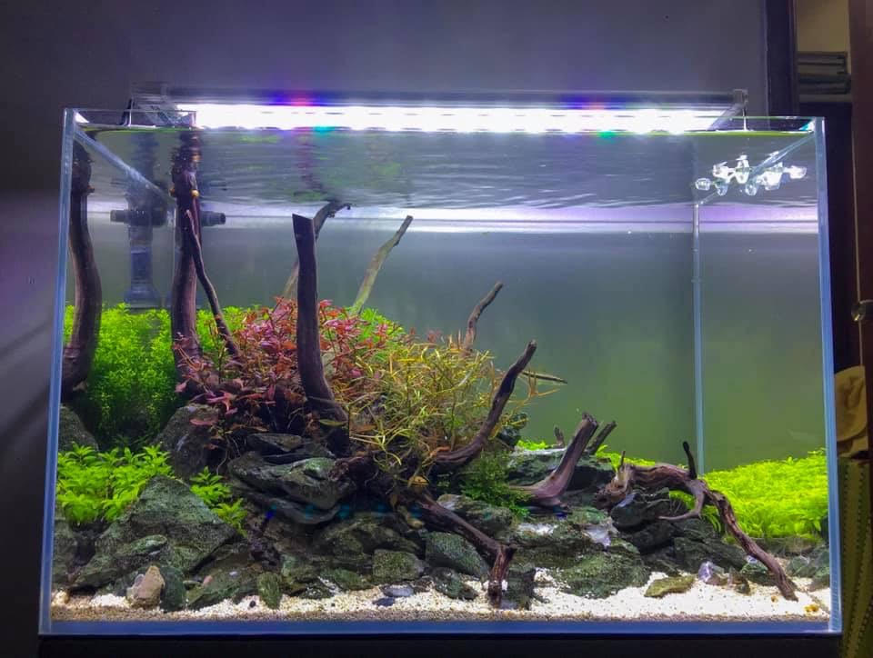 Nature Style Triangle Layout 10 Gallons Aquascaped by Jeremy Navarro Philippines