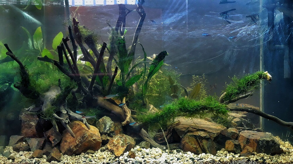 Nature Style Triangle Layout 30x18x18 in Lowtech Aquascaped by Fritz Rabaya Philippines
