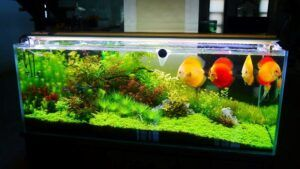 Nature Style with Elements of Dutch High-Tech Aquascaped by Jay-R Huelar Philippines