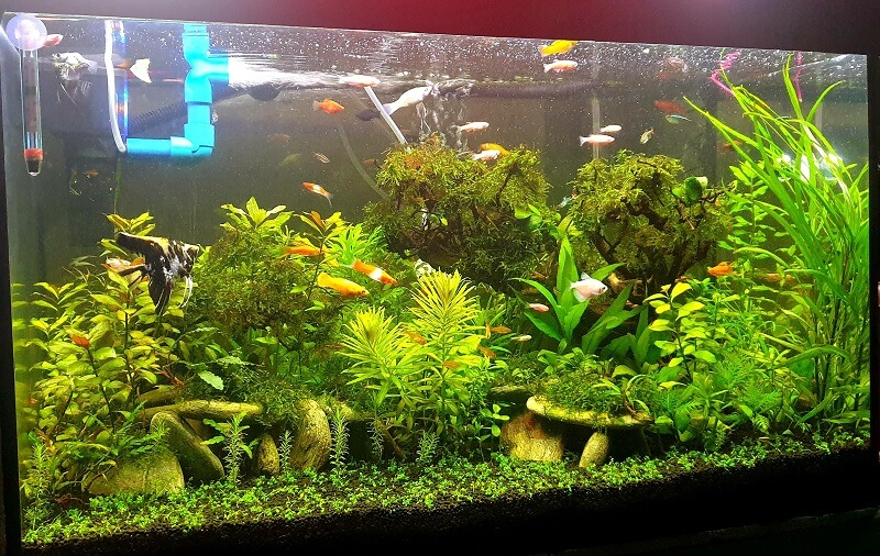 Nice Growth But Still Have Staghorn and Black Beard Algae Lots of Them So I Started to Take Action