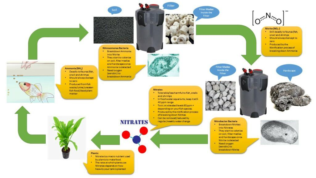 The Planted Aquarium Nitrogen Cycle