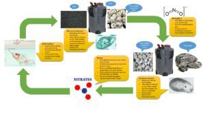 The Nitrogen Cycle in Our Aquariums Without Plants