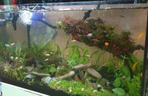 New Ista Aquasoil and Ordered New Plants Got Lazy with the Monte Carlo Carpet and just Weighted them in Bunches