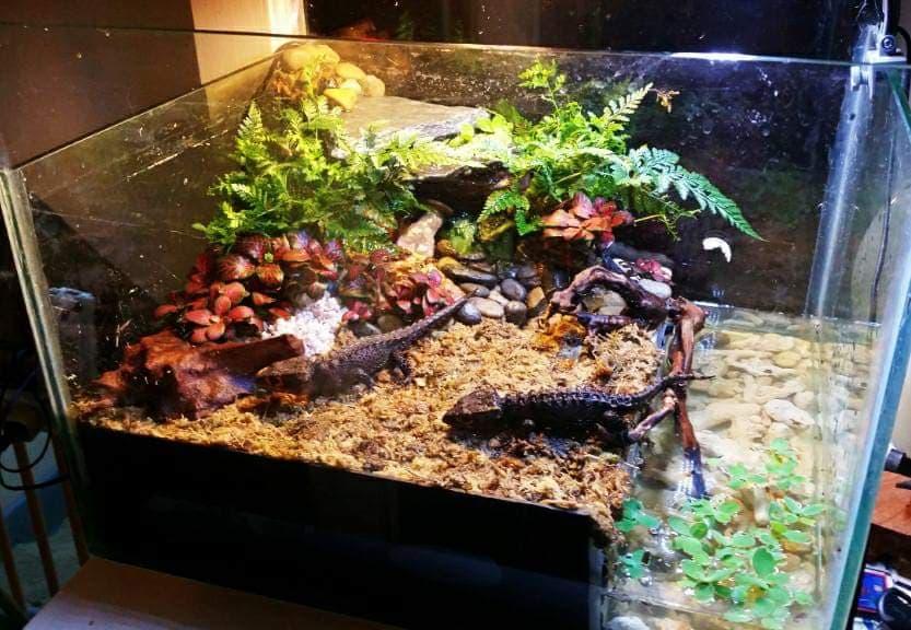 Paludarium Standard Aquarium Tank by Yuno Cyan Philippines