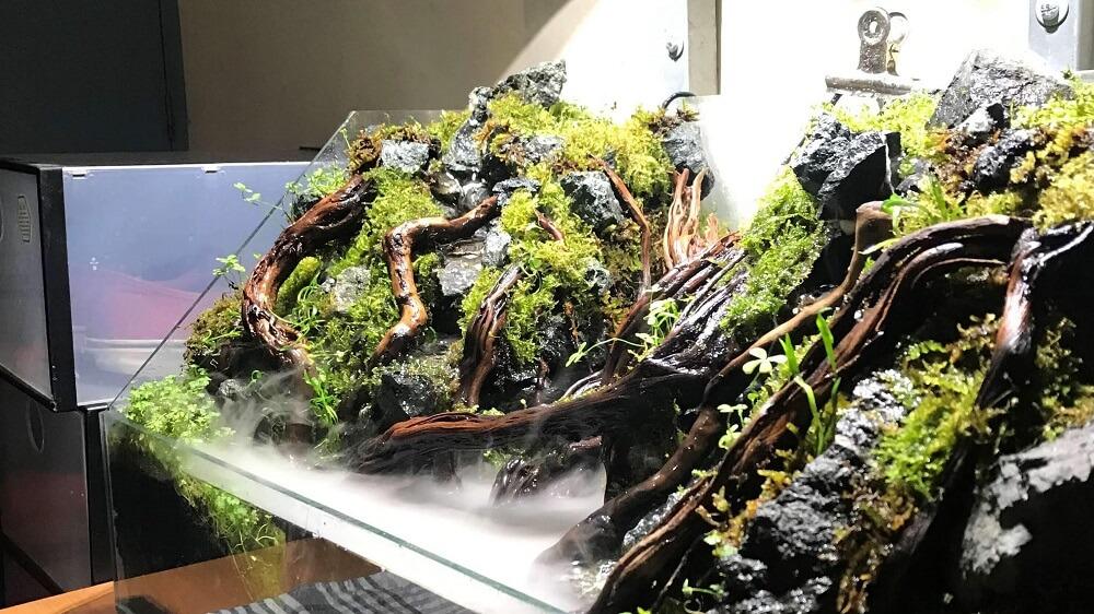 Paludarium Using Aquasoil by Jeremy Navarro Philippines