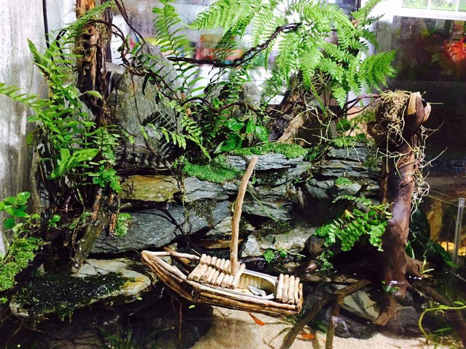Paludarium by Chuck Llorca Cajilig Philippines