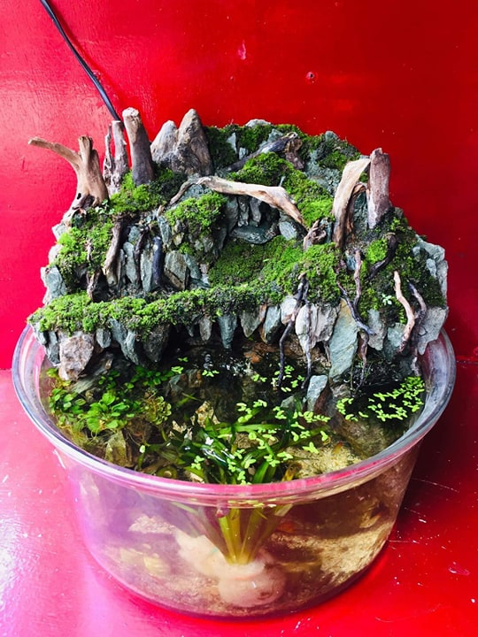 Paludarium in a Basin by Chuck Llorca Cajilig Philippines
