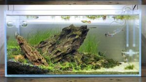 Rimless Tank Aquascaped by Geoffrey Javier Philippines