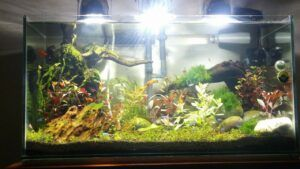 Rimless Tank Aquascaped by Than Tagam Philippines