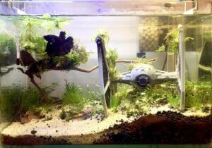 Taiwanese Style Tie Fighter-Star Wars 2.5 Gallons Low-Tech Aquascaped by Jody T. Dela Cruz Philippines
