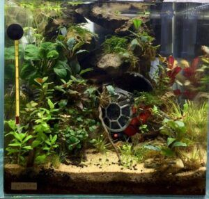 Taiwanese Style Tie Fighter Star Wars Black Edition 7 Gallons Low-Tech Aquascaped by Jody T. Dela Cruz Philippines Resized