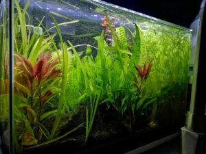 Walstad Tank Aquascaped by Dino Potenzial Philippines