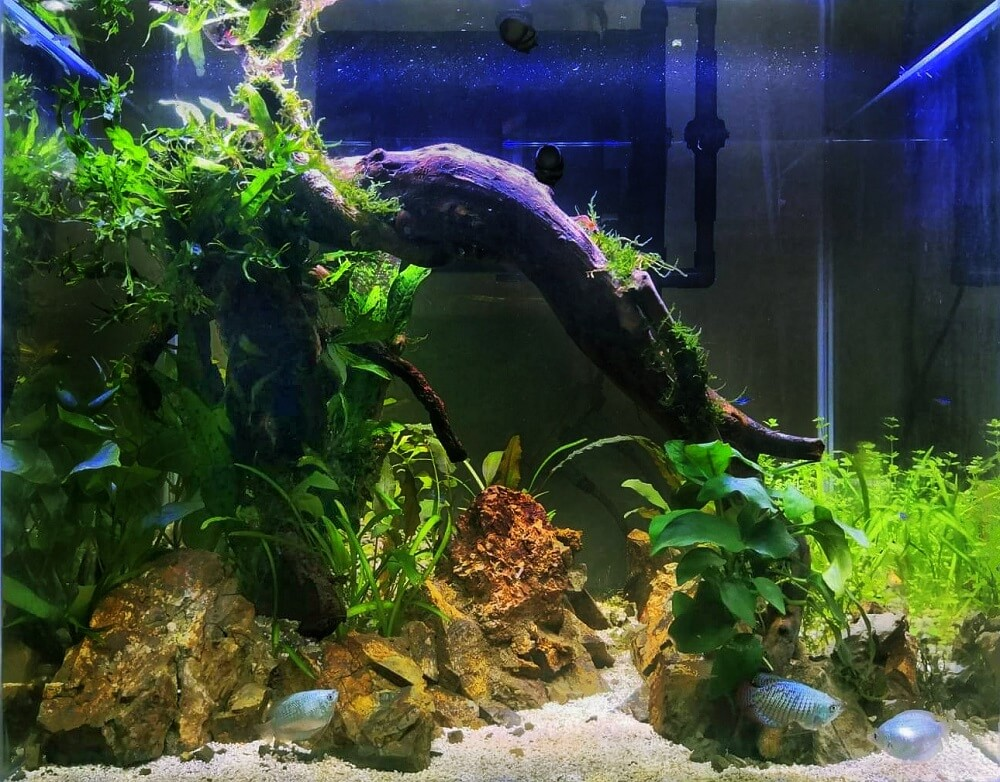 Walstad Tank Aquascaped by Fritz Rabaya Philippines