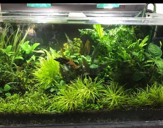 Walstad Tank Aquascaped by Martin Ladioray Philippines