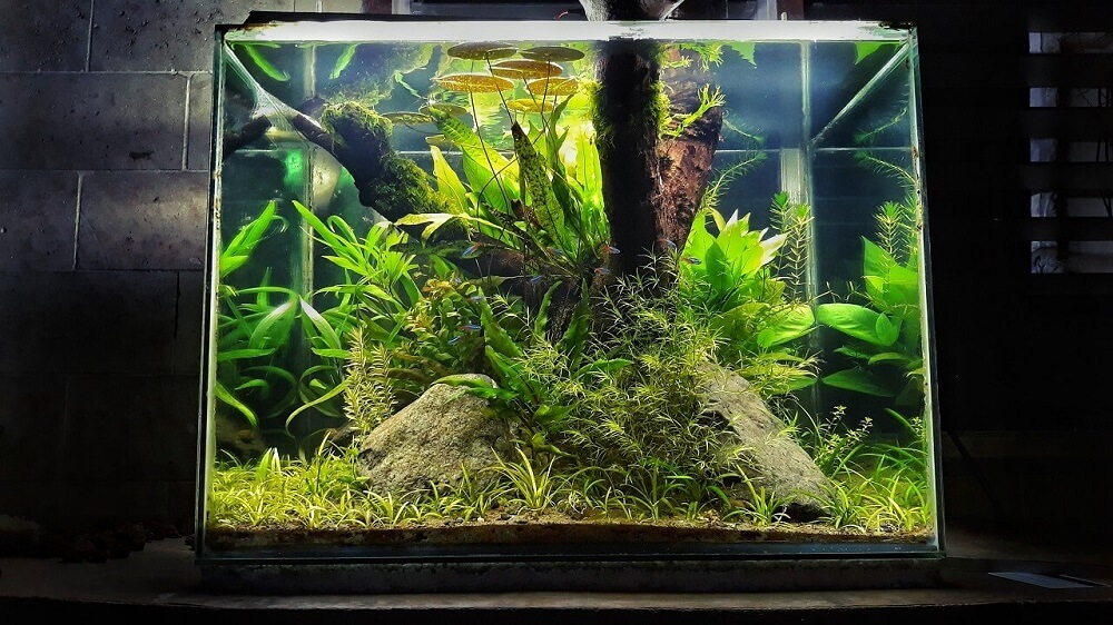 Walstad Tank Using a Filter Aquascaped by Fritz Rabaya Philippines