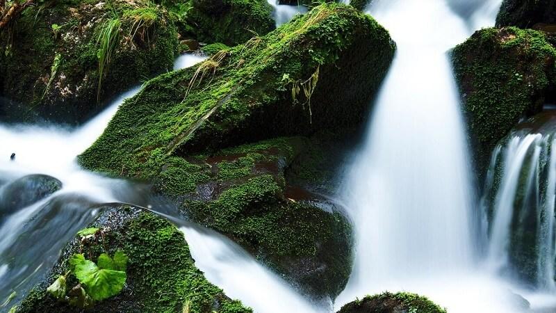 Waterfall Epiphyte Plants