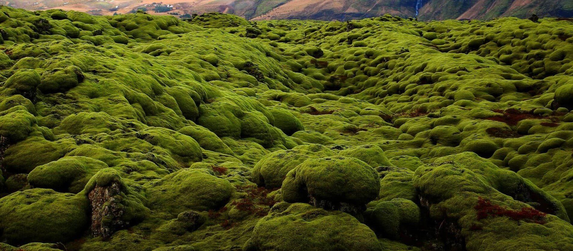 moss in rocks