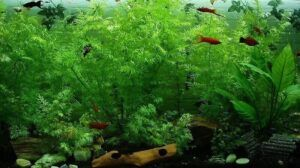 planted aquarium heavily planted