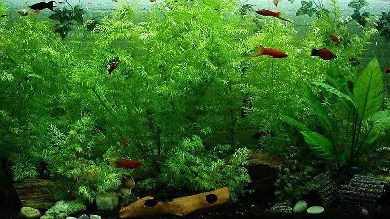 planted aquarium heavily planted