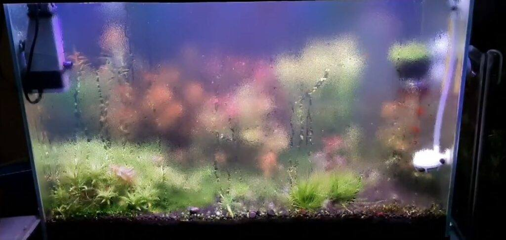 A Planted Aquarium in an Airconditioned Room by Omar Krishnan Afuang Philippines